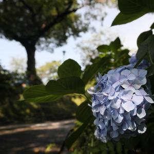 20.06.28:舞鶴公園花散策4