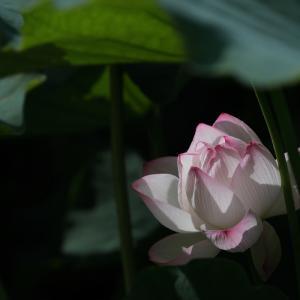 20.06.28:舞鶴公園花散策5