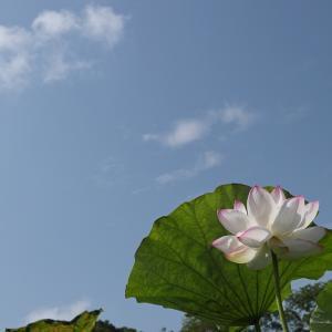20.06.28:舞鶴公園花散策7