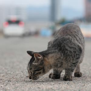 20.07.05:伊崎漁港でニャンコ1