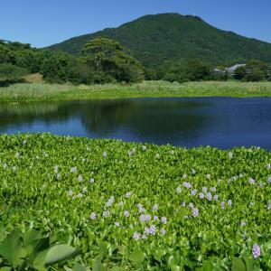 20.08.15:糸島から布袋葵、筑肥線