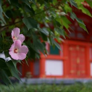 20.08.26:呉服町界隈を昼休み散歩2