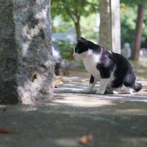 20.10.14:呉服町界隈の猫散歩(後編)