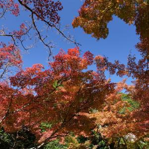 20.11.14:仁比山神社の紅葉狩り1