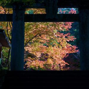 20.11.14:仁比山神社の紅葉狩り2
