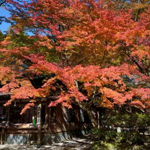 20.11.14:仁比山神社の紅葉狩り3