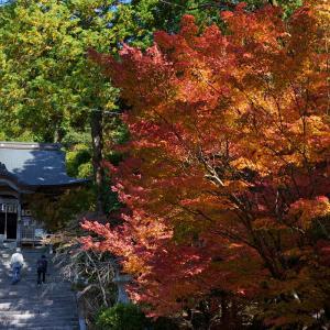 20.11.14:仁比山神社の紅葉狩り4