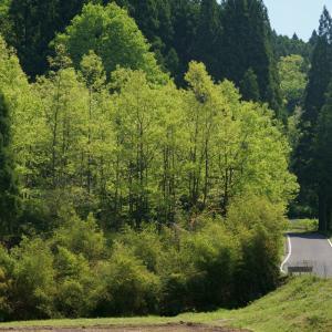 21.05.03:脊振の山里に新緑を訪ねて3