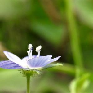 ホシノヒトミ      植物たちへの感謝をできるだけうつくしいことばで       東京都江戸川区小川の辺