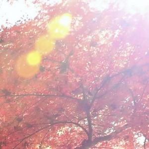 イロハモミジ、と    イノチあふれる深い森       千葉県千葉市の深い森