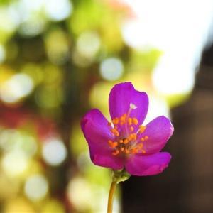 ナツハナビ    僕の好きが全部ある    千葉県市川浦安アスファルト脇植物園・自宅