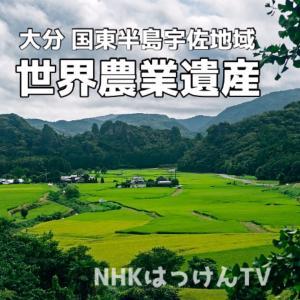 大分県の『世界農業遺産』をTVでご紹介させて頂きました!  にわか明太子