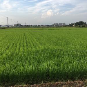 新松戸探検⑩ 篠崎サイクル