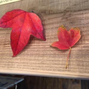 秋と冬の間を楽しむ