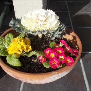 我が家の家庭園芸