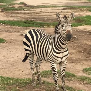 グアダラハラ旅行(11) Zoologico Guadalajara②〜動物園〜