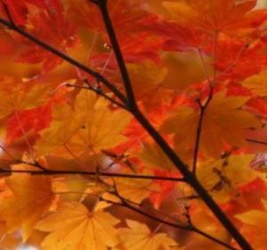 秋は1年で一番抜毛が多い季節