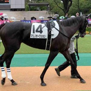 2020/6/20(土)~21(日) My注目馬&My注目種牡馬 出走予定