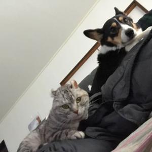 20200218の猫たちと時々犬