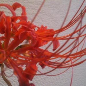 キズグチに咲かす花。