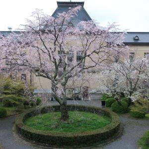 京都府庁旧本館の桜&ポワン・プール・ポワン&パティスリー195*