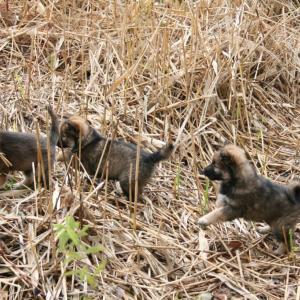 ワン公たち誕生日なり 犬の殺処分率が低い都道府県ランキング【完全版】