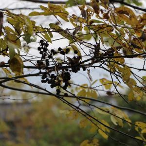師走にて庭の🍂枯葉の吐く息よ