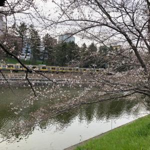 桜開花と総武線
