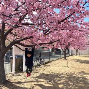 毎年、桜が咲くと困惑する