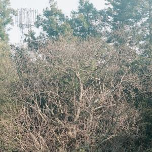PENTACON six TLと近所の樹木