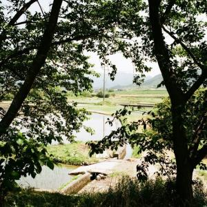 CONTAX G1と樹木越しに見る水の入った田圃