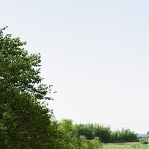 CONTAX G1と川沿いの犬の散歩