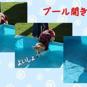 マリーちゃんとプール開き