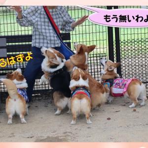 犬生 初めての味なの?