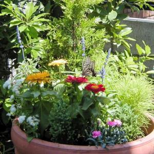 """""""時間というフィールドに幸せの種をまこう!◆今日は植物学の日"""""""