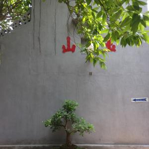 ハノイの盆栽