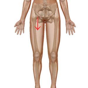 股関節は中央にあり!イメージと違った股関節の位置