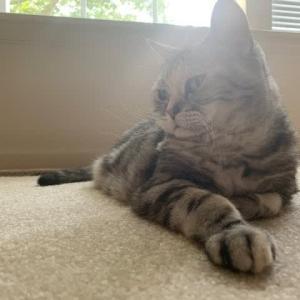 猫なら許される不思議