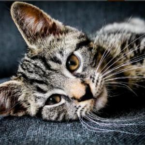 謎の猫とチームビルディング