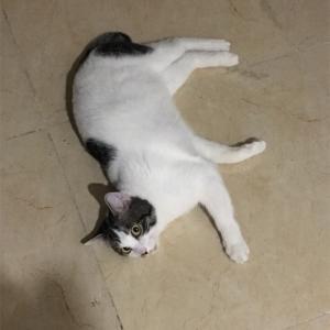 猫くんの不調