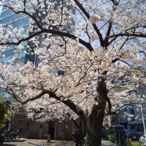 日常の工夫、はぁ、東京ラブストーリー