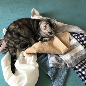 洗濯物と猫。