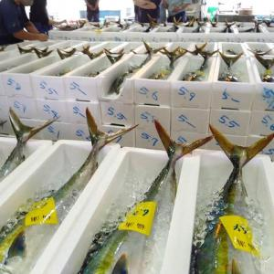関東梅雨入りも、魚の水揚げは夏モード突入!JSフードシステム