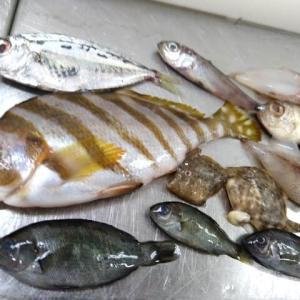 小さな魚体でも模様はそのまま!かわいい赤ちゃん小魚たち|JSフードシステム