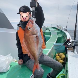 剣崎 マダイ釣り!初のマダイ船でノッコミ真鯛を釣りまくり!