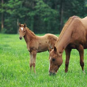 マジェスティックウォリアー産駒の特徴|得意なコースや距離、重馬場適性や血統分析