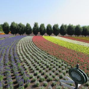 『ガーデンに行こう♪』その7:ラベンダーの終わったファーム富田ですが…