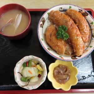 小樽祝津 青塚食堂のホッケ焼きと花魚丼、そして【朗報】豊平公園のエゾリス生存確認!
