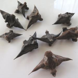 忍びが通る獣道、マキビシ撒いたのカムイかしら?東屯田川遊水地は水鳥がいっぱい!