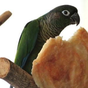 本日のおやつもでっかいぞ!超強力小麦ゆめちからのパイと念願のパンダガモ ミコアイサ